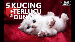 5 JENIS KUCING TERLUCU,TERIMUT,TERCANTIK DI DUNIA!!  (PECINTA KUCING)