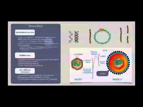Basiskurs Mikrobiologie: Viren (Aufbau & Struktur)