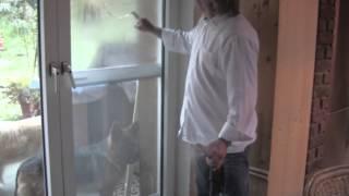 Reinigung von Hunden, Fenstern und Teppichen