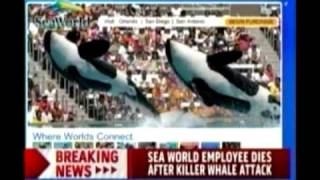 Trainer Killed by Killer Whale At Sea World