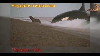 Wild Fauna. Хищники / Неудачи / Predator Fails (документальные фильмы)
