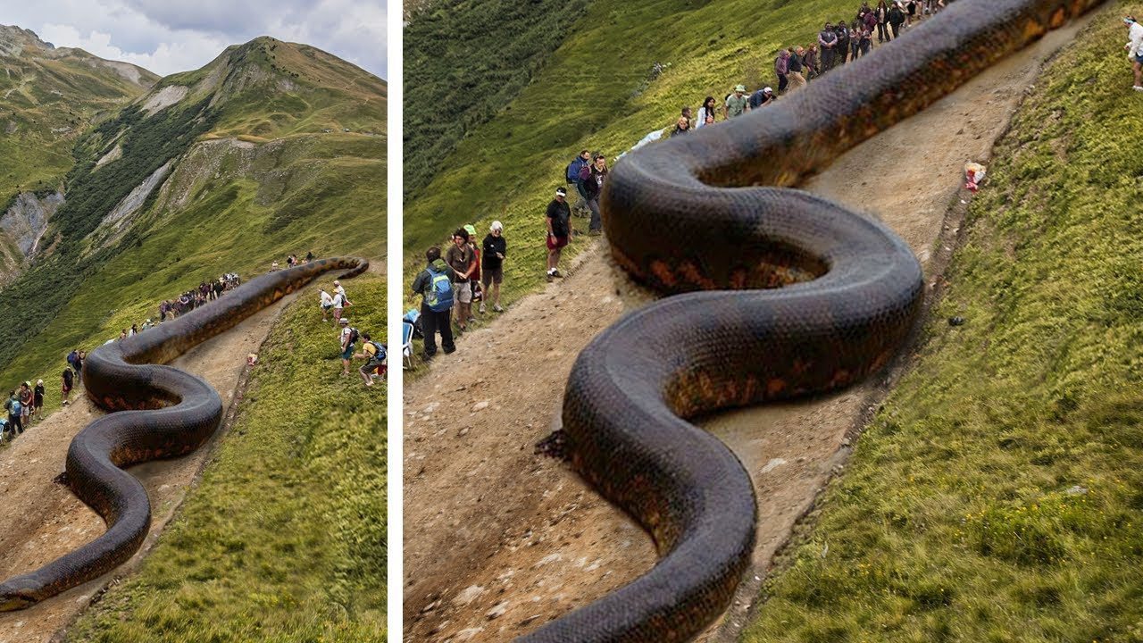 10 Giant Animals People Couldn't Believe Were Real!