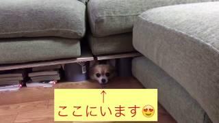 ソファーの下10センチぐらいです。 狭いスキマが大好きなナナちゃん.