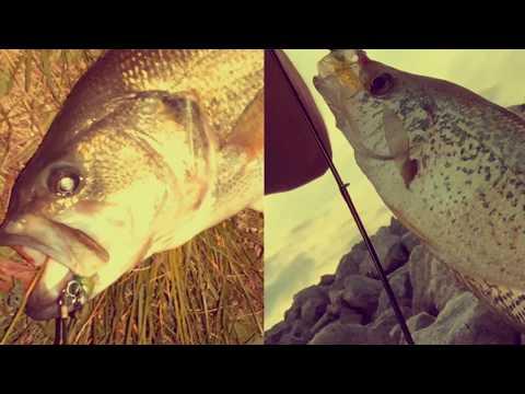 Zebco Rhino Blank INDESTRUCTIBLE Fishing Rod