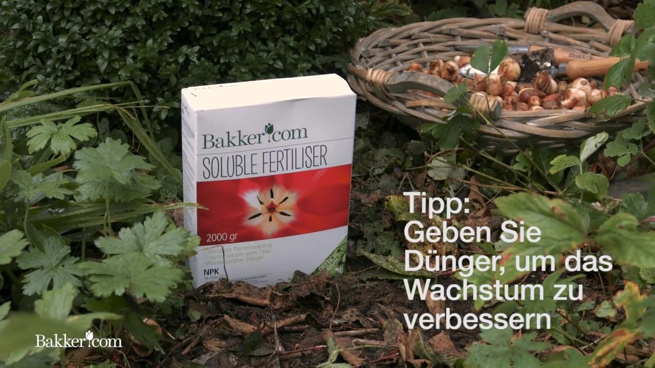 garten tipp 19: blumenzwiebeln pflanzen - youtube
