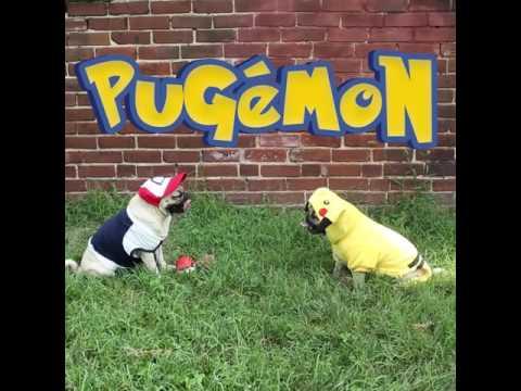 Pokémon - Doug The Pug