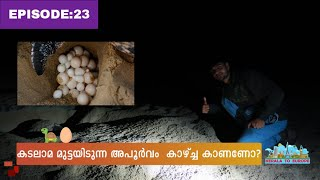 World Ride|EP:23|Turtle Reserve beach oman/കടലാമ  മുട്ടയിടുന്ന അപൂർവം കാഴ്ച !!!