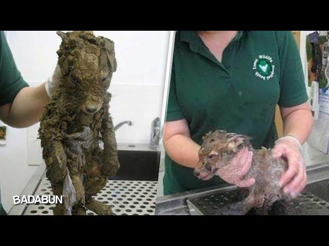Pensaron que era un perrito sucio, pero cuando lo bañaron
