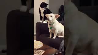 قط يفكر كثير قبل أن يضرب الكلب