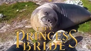 The Princess Bride but it's acted out by an elephant seal