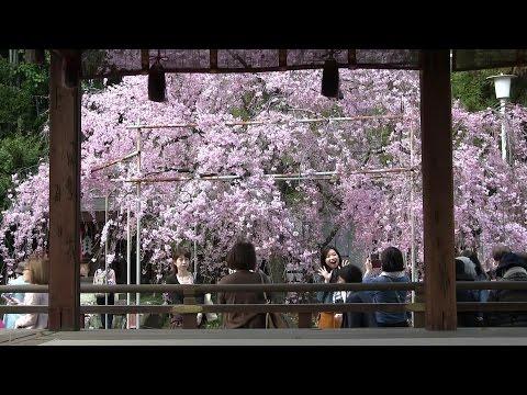 京都(洛中)観光 Kyoto(Center Area) Sightseeing