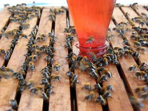 Coletivo de abelhas
