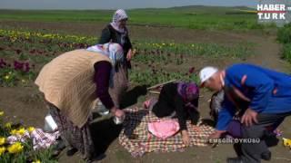 Seymen Köyü Lale Üretimi - Habertürk , Emeğin Öyküsü Programı