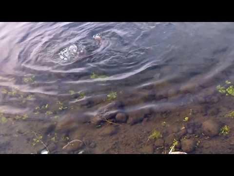 Trout Fishing Rocky Ford Creek Wa