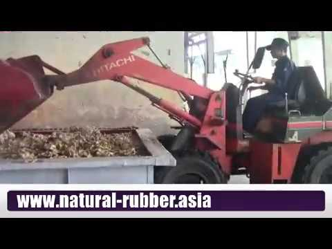 The production process of natural rubber SVR-10, SVR-20 in Vietnam