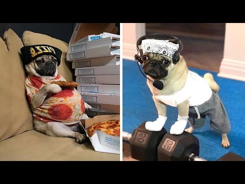 Funniest and Cutest Pug Dog Videos Compilation 2020 #6