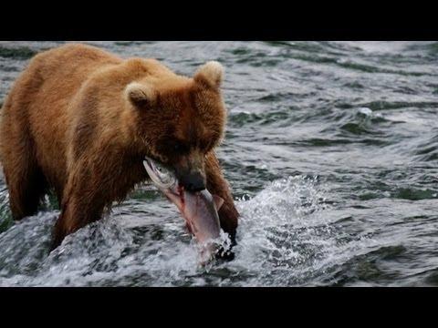 Alaska - Uncharted Waters - Canon 5D Mark III | DEVINSUPERTRAMP