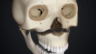 видео Внутренняя крыловидная мышца