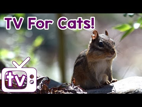 Cat TV: Videos for Cats to watch with Relax my cat music!