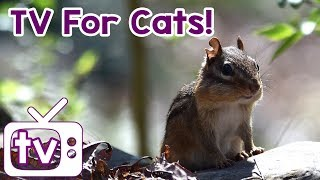 Cat TV Videos for Cats to watch with Relax my cat music!