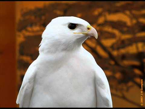 Cathedral Lake Singers-White Eagle