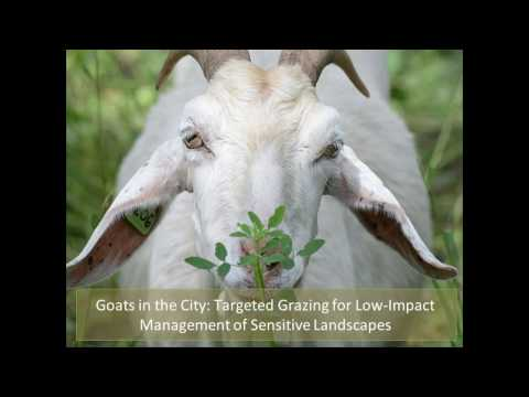 Goats in the City:  Targeted Grazing for Low Impact Management