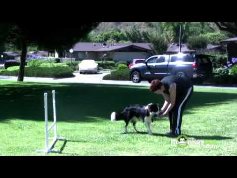 Dog Agility - Training Your Dog To Work Away From You