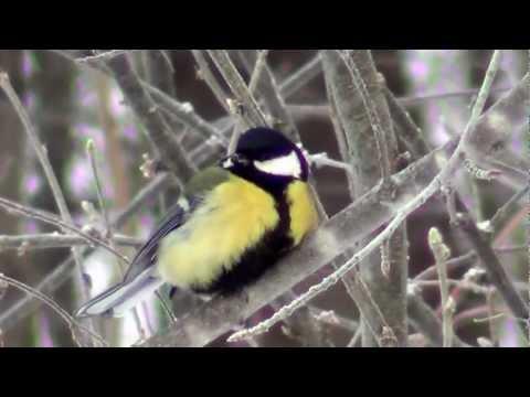 Чем кормить птиц... или Заполнение кормушки