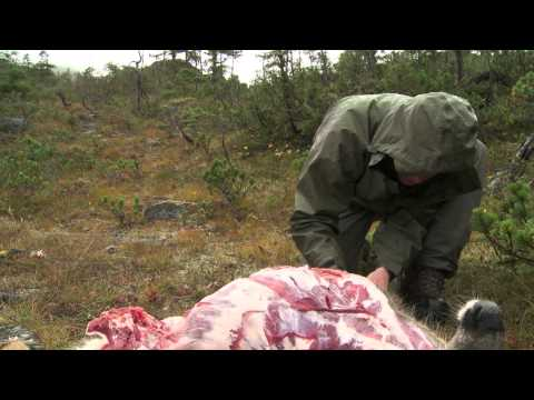 How to Quarter and Pack Game out of the Backcountry - Conservation Field Notes with Steven Rinella