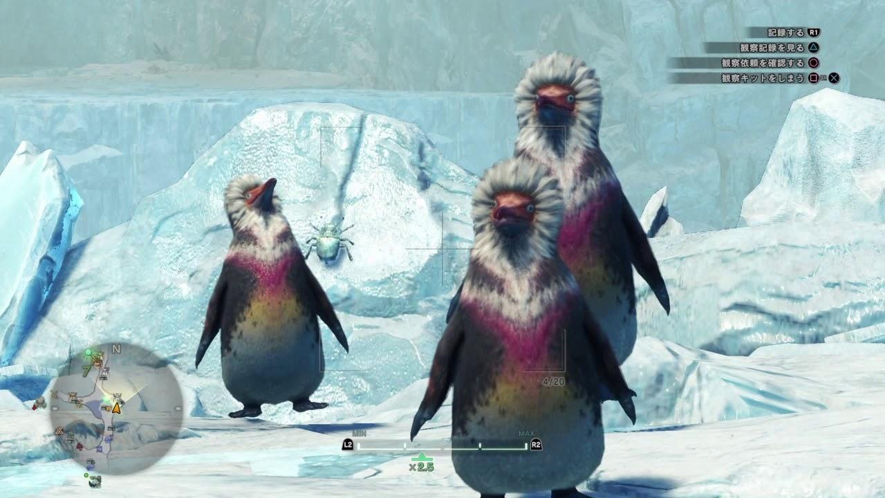キ ブクレ ペンギン 捕まえ た