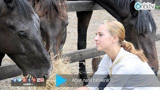 Atlar Nasıl Beslenir?