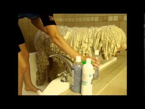 Komondor Bath