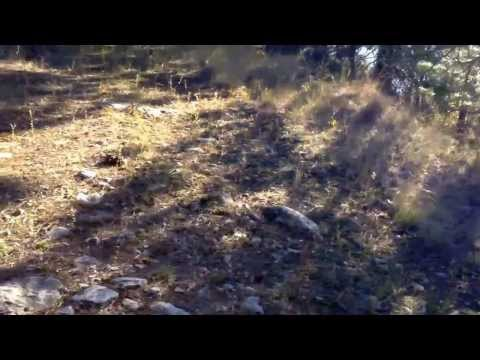 Penticton BC rattle snake
