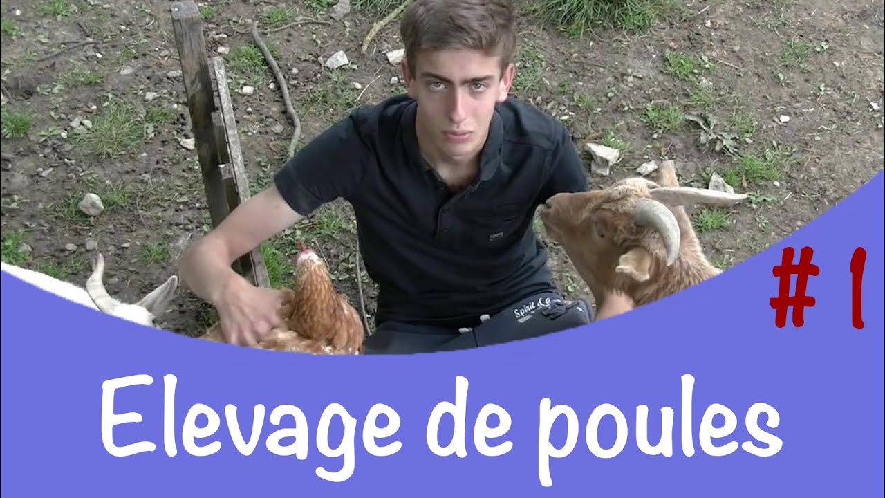 elevage de poules 1 pr sentation de mon levage youtube. Black Bedroom Furniture Sets. Home Design Ideas