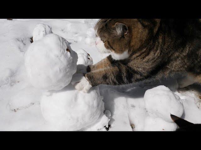 雪だるまとねこ。-Snowmen and Maru&Hana.-
