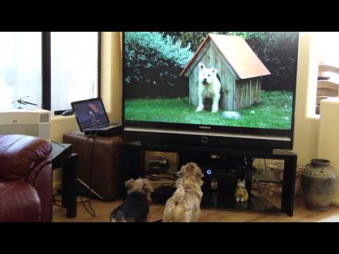 My Norfolk Terriers loved this ad on TV