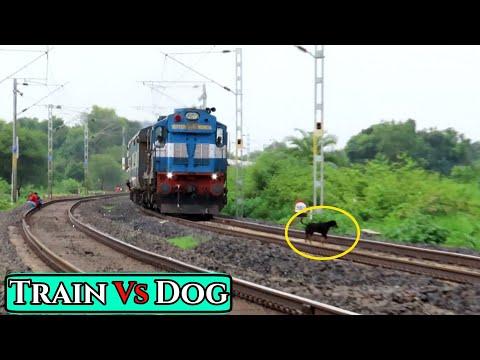 यमराज के हांथों में कुत्ते के प्राण ? , Dog Escapes Death || Did the Dog Die ???