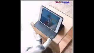 Приколы с котами. Часть 35.