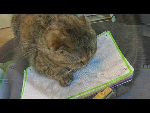 Kattenbakombouw met Sofa