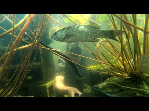 Thump is going HOME! The Most Epic Fish Recovery!!! Awesome Underwater Footage!!!