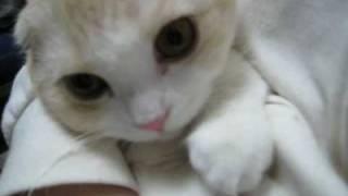 抱っこされて眠るメイ Cat that sleeps in my arm.wmv thumbnail