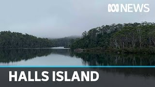 The island fuelling Tasmania's newest wilderness battle | ABC News