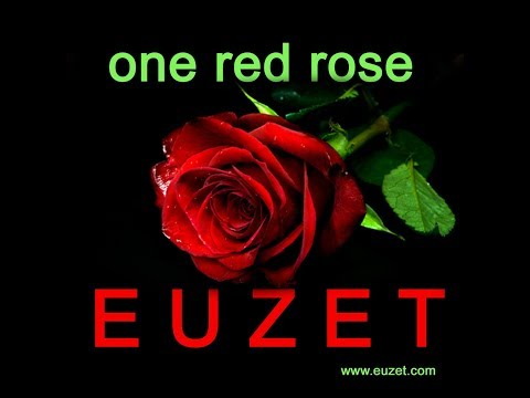 ONE RED ROSE - Didier EUZET (1897 2K18)