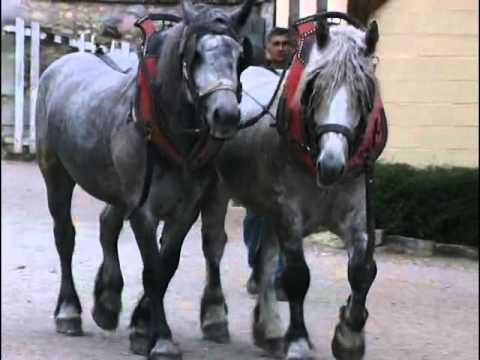 les chevaux de trait au coeur de la tradition youtube. Black Bedroom Furniture Sets. Home Design Ideas