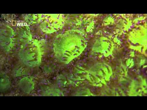 Facing The Atlantic   english Documentary National Geographic Wild Part 2