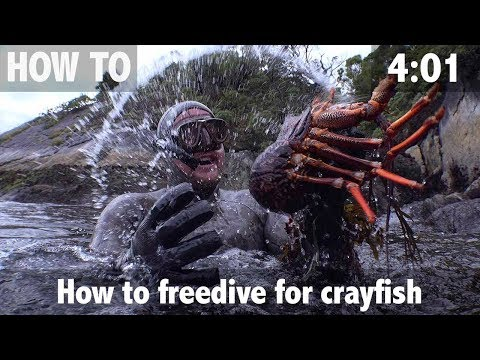 How To Freedive For Crayfish