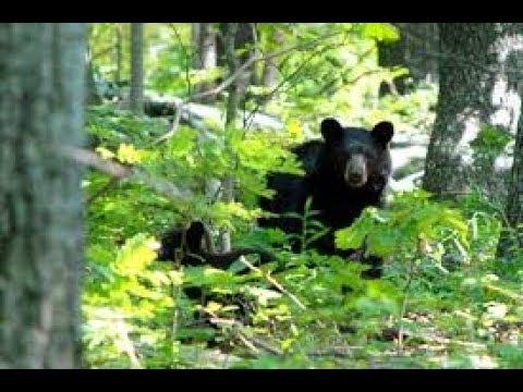 Florida's biggest park pt 2 SAW A BEAR 🐻