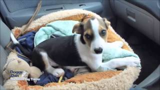 How To Train A Dog - Puppy's First Car Trip
