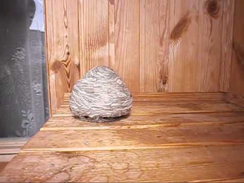 Как убрать осиное гнездо на балконе видео