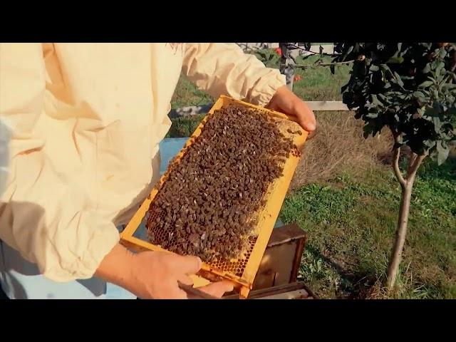 #gjesi: Jetë mes bletëve